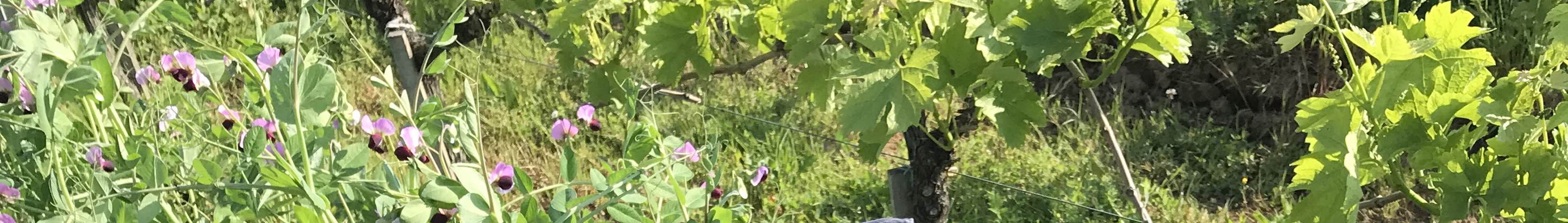 Vines - May 2018